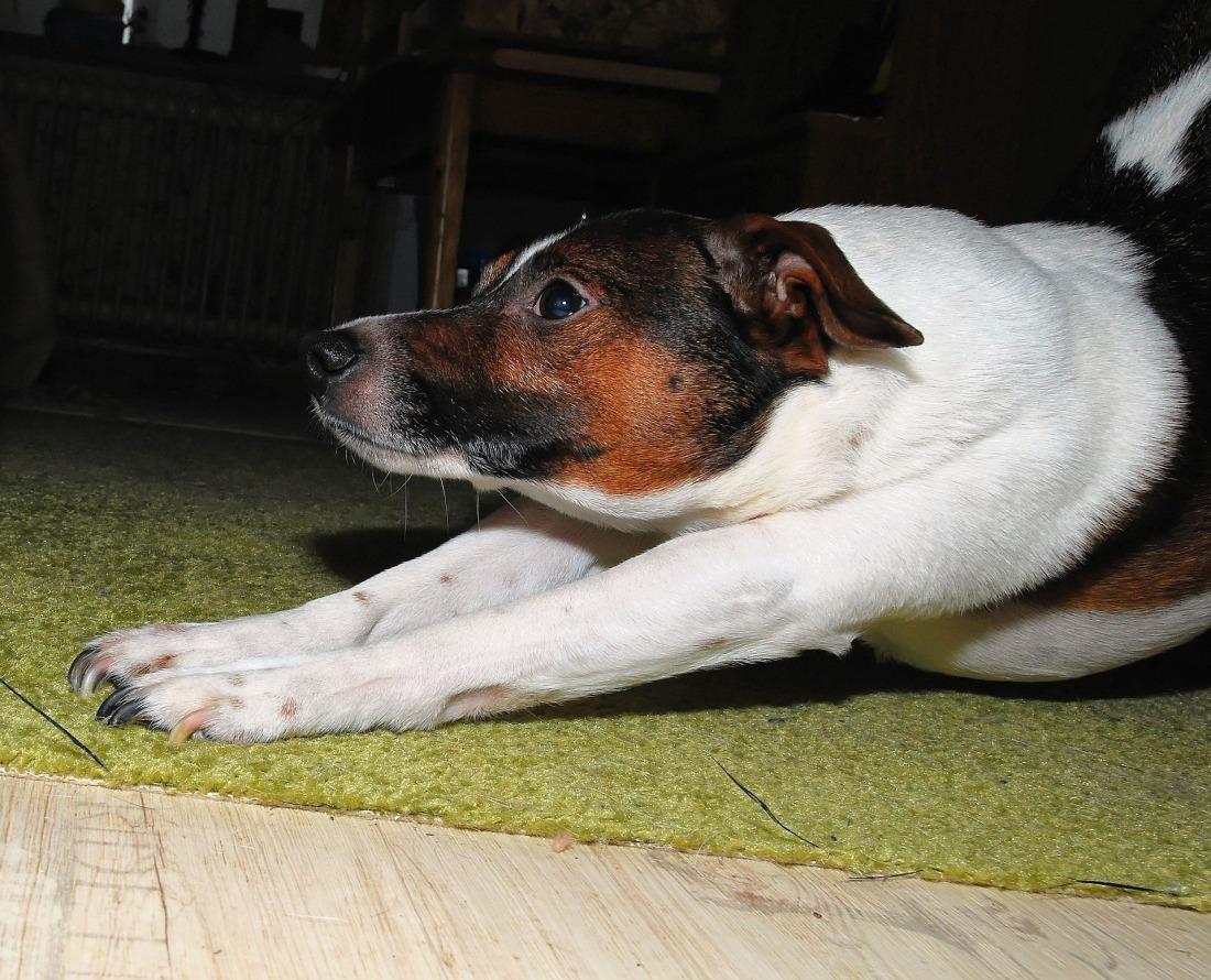 dog-654719_1920.jpg