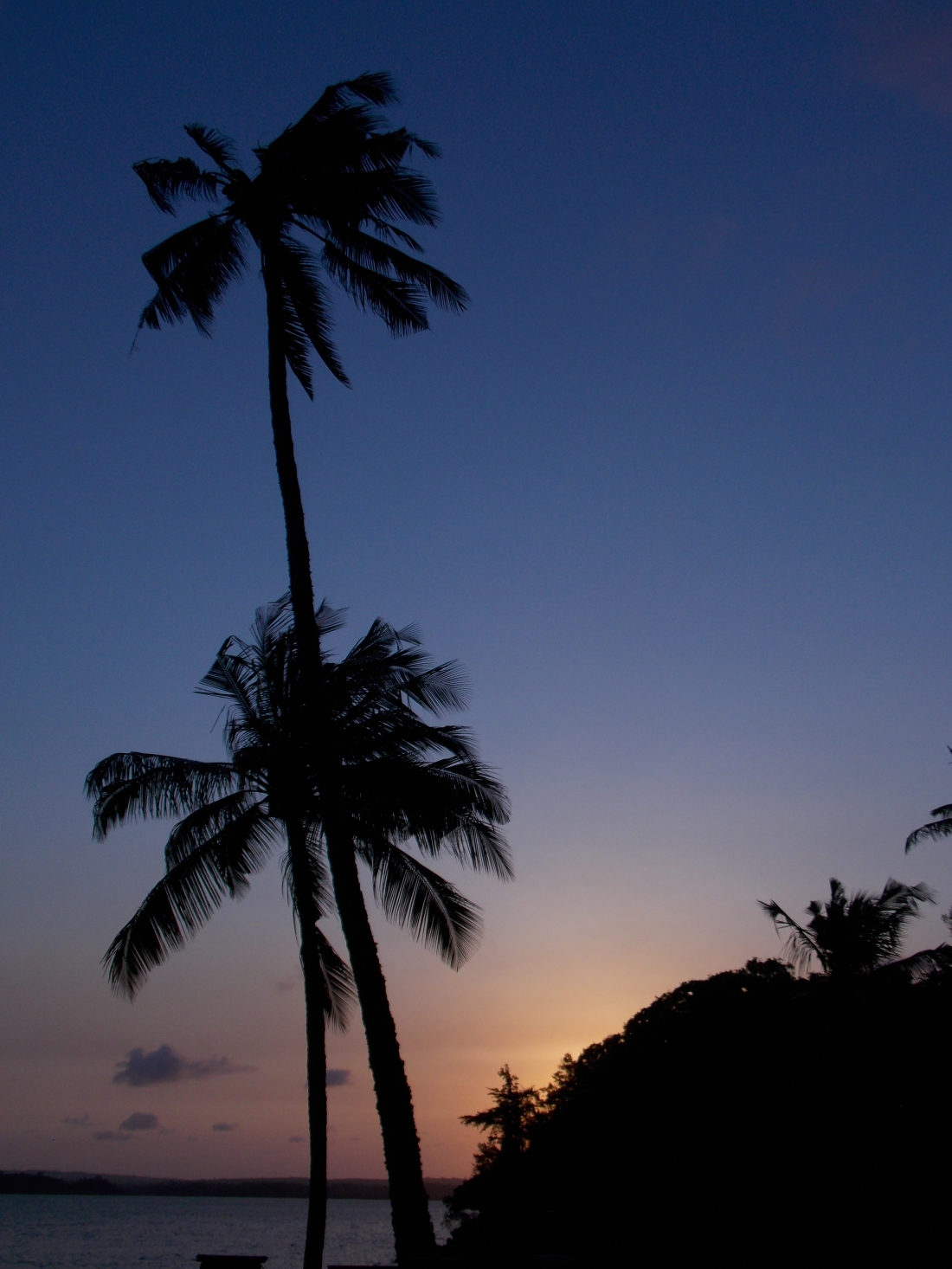 Sunset silhouette of palm trees