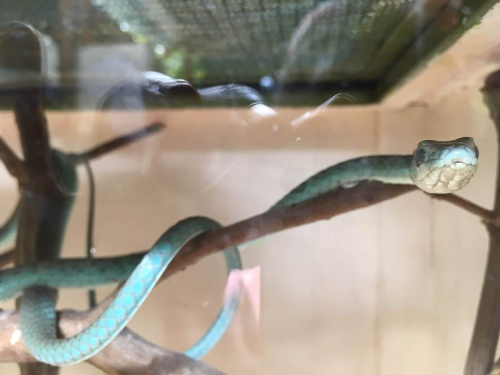 Blue-ish green snake