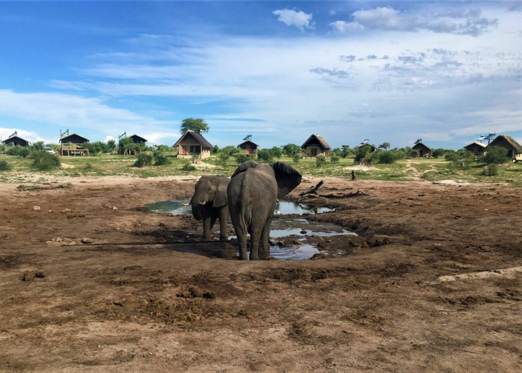 Two African elephants playing at a natural waterhole at Elephant Sands in Nata, Botswana